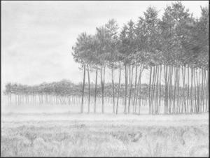 hutan yang berkabut